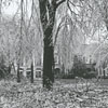 Ice storm hits Winston-Salem and damages trees throughout the city, 1967. Photo shows the Wake Forest campus.