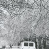 Ice storm hits Winston-Salem and damages trees throughout the city, 1967. Photo shows Reynolda Road.