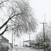 Ice storm hits Winston-Salem and damages trees throughout the city, 1967. Photo shows Brookstown Avenue, looking west.