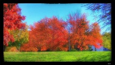 fall-bright-1116