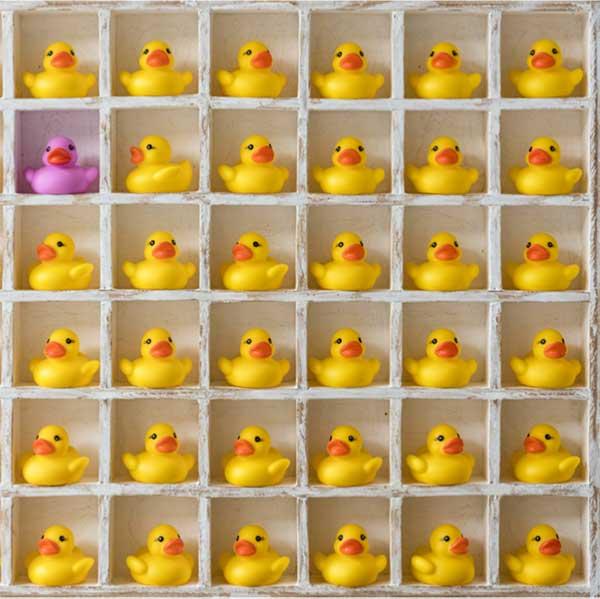 35 yellow rubber ducks and 1 purple rubber fuck