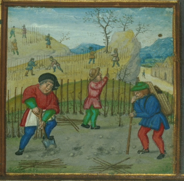 March from the Walters Museum W.425 fol. 3r showing one man spading the dirt while another inserts a post in the ground, and a third ties vines to a posts.