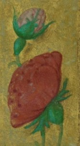 Marginal detail from Walters W.425 possibly showing a rose blossom