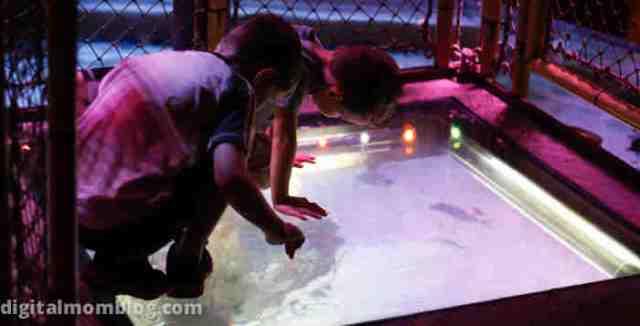 standing over fish at sea life aquarium in grapevine, tx
