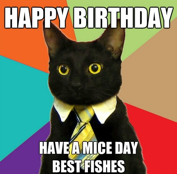 funny cat birthday meme