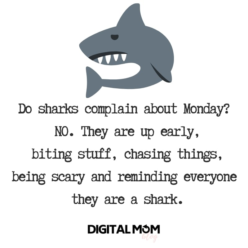 Do sharks complain about Monday? NO. They are up early, biting stuff, chasing things, being scary and reminding everyone they are a shark.  monday quote motivation