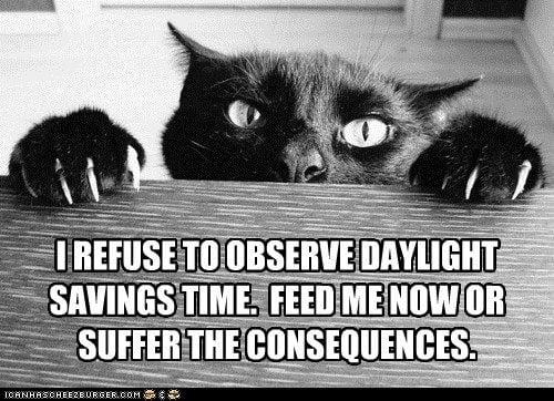 cat-daylight-savings-meme