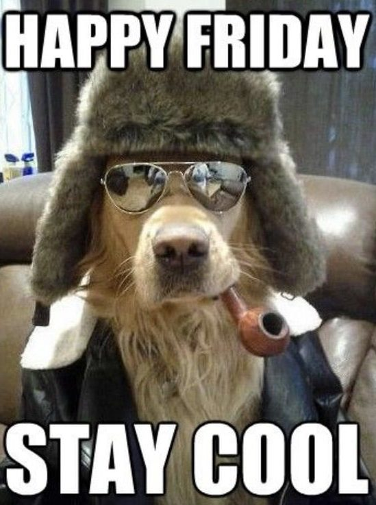 Happy Friday Stay Cool - photo of dog smoking pipe wearing sunglasses