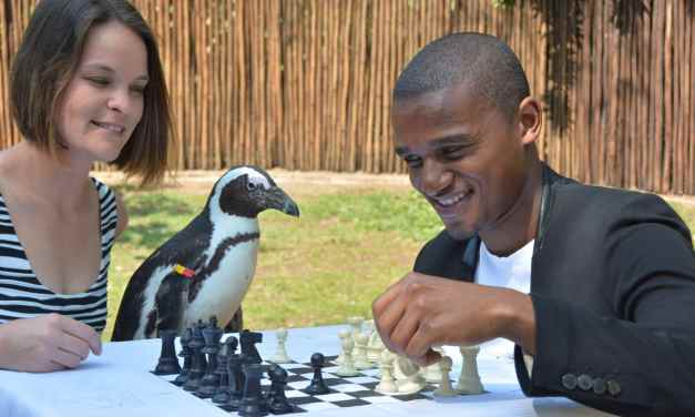 Get your entry in for uShaka Marine World's Chess Carnival 2017