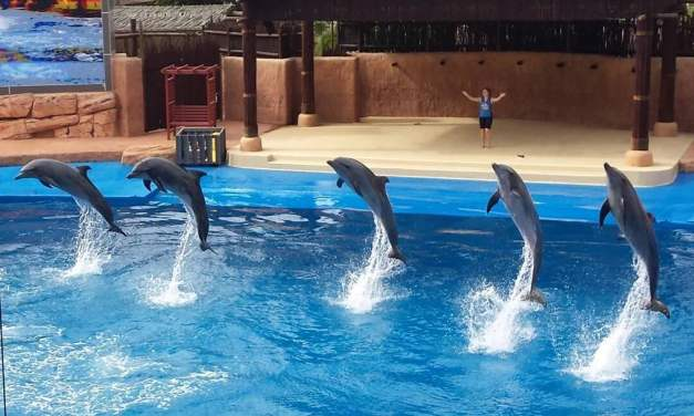 uShaka gets festive with Dolphins By Starlight
