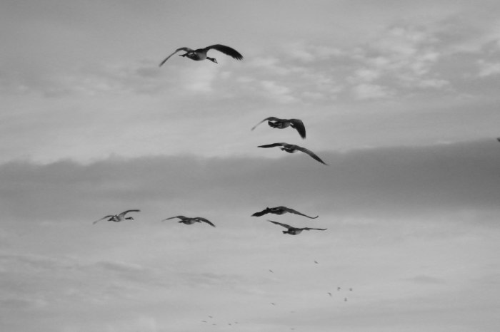 Flying-geese_black&white