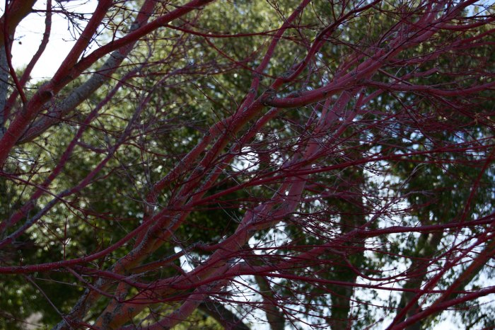 Branches_Luminosity
