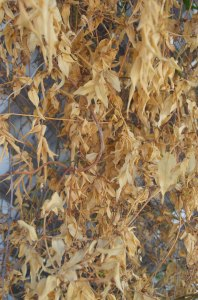 leaves_105_db_web
