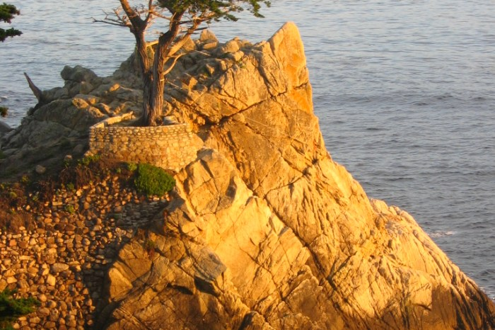 Lone_Cypress_Sunset