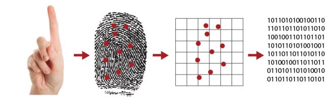 Optical vs Ultrasonic Scanners