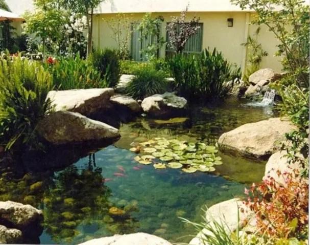 Fish Pond Ideas Backyard