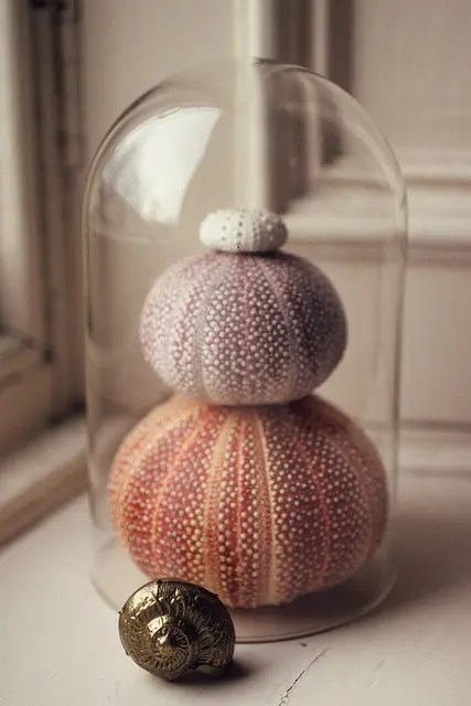 Decorating With Sea Urchins 27 Cool Ideas DigsDigs