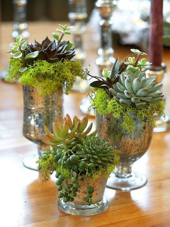 Patio Pots And Containers