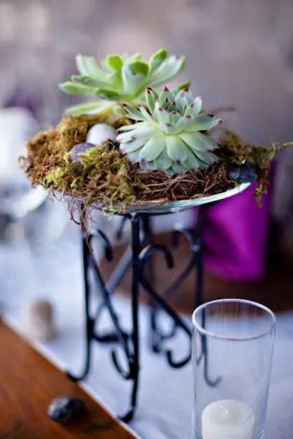 Where Can I Buy Succulent Plants