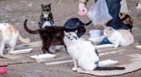 Pemotongan Hewan Kucing, Ini Pandangan Hukum