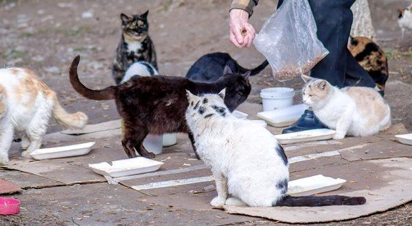 Sedekah Kepada Kucing Balasannya Luar Biasa