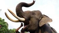 Melihat Wisata Baru Menunggangi Gajah di Hutan Seulawah Aceh
