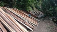Penebangan Hutan secara Liar, Kades di Deli Serdang Diamankan