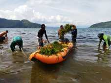 Hari Bumi, Kayaker Eksplorasi Toba Aksi Bersih dan Tanam Bibit di Lembah Bakkara