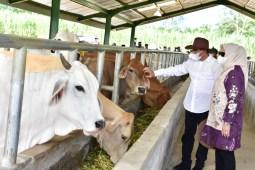 Resmikan Instalasi Pembibitan Ternak Sapi, Kabupaten Palas Didukung Jadi Lumbung Ternak