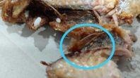 Waduh! Ada Belatung di Jatah Makan Siang Pasien Covid-19