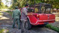 Mengejutkan! BBKSDA Riau Ragu Kalau Bocah Tewas Tanpa Kepala Dimakan Harimau