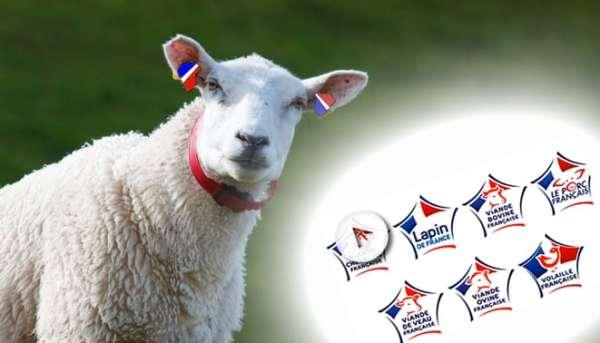 """Après la viande bovine et porcine, ce sera bientôt au tour des ovins d'avoir leur propre label estampillé """"Viande de France"""" © Studiomag/Montage Fotolia"""