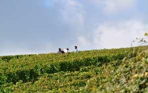 La Bourgogne recrute 7000 vendangeurs