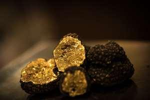 Foire: la truffe de Bourgogne fait grise mine