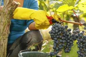 Les vignerons de Bourgogne pestent contre les députés