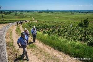 Chemin Gourmand de Nuits-Saint-Georges : en marche pour la bonne cause