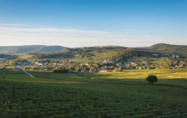 vendanges-mercurey-171