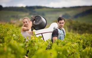 Vendanges en Bourgogne