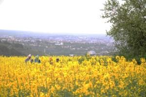 Balade Gastronomique : trois chefs tout en haut de Dijon