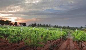 Foire de Dijon : le vin, autre merveille de l'Inde ?