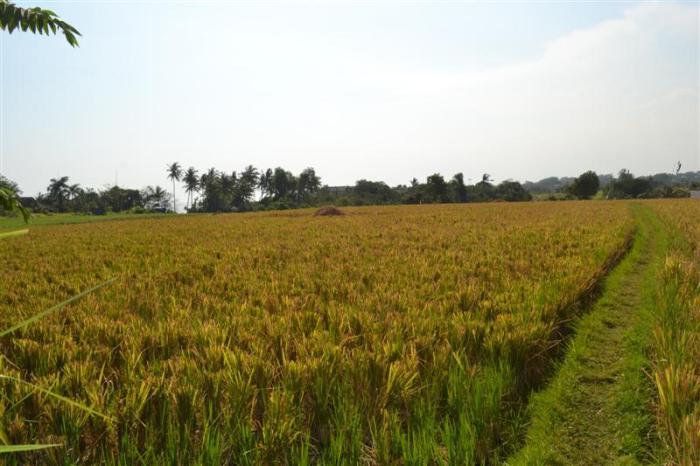 Dijual tanah di Canggu, Bali