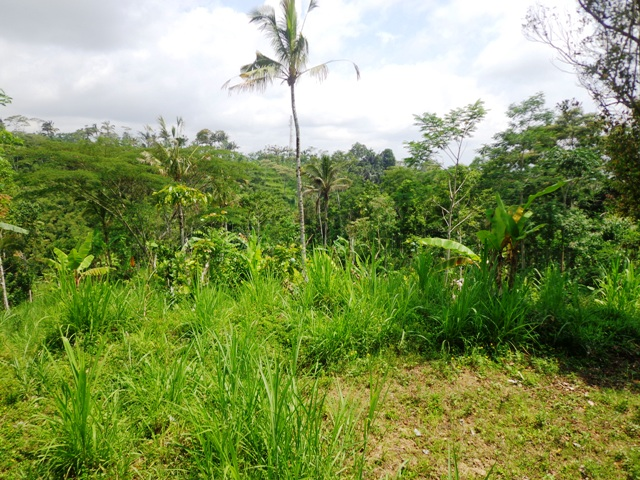 Land in Ubud Tegalalang
