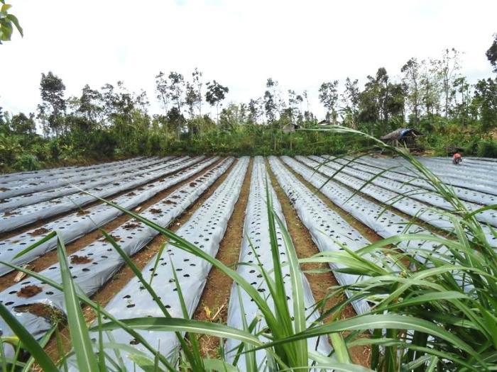 Tanah dijual di Tabanan Bali