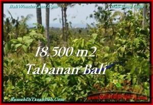 TANAH MURAH di TABANAN BALI 18,500 m2 di Tabanan Selemadeg