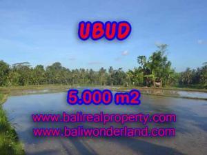 TANAH di UBUD DIJUAL 50 Are di Ubud Payangan