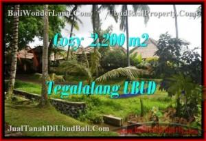 DIJUAL TANAH MURAH di UBUD 2,200 m2 di Ubud Tegalalang