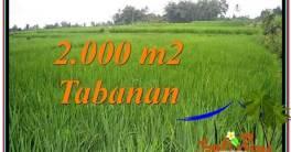 TANAH DIJUAL MURAH di TABANAN 20 Are di Tabanan Penebel