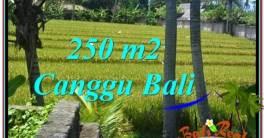 TANAH MURAH di CANGGU 250 m2 View sawah lingkungan villa