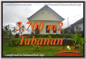 TANAH DIJUAL MURAH di TABANAN 3,700 m2 di Tabanan Penebel