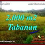 TANAH di TABANAN JUAL MURAH 20 Are View Laut, Gunung dan Sawah